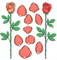 Isolated rose and petals handmade in sketch style vector image