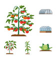 design of greenhouse and plant symbol vector image