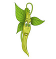 french bean vegetable vector image vector image