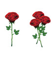red roses with green leaves on white background vector image vector image