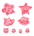 set of decorative pink roses vector image