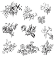 Meadow flower and leaf set isolated on white vector image