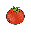 delicious and health tomato vegetable vector image vector image