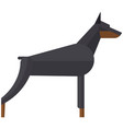 doberman pinchers angry security dog vector image vector image