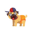 funny pug dog character wearing in baseball cap vector image vector image