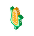 healthy food vegetable maize isometric icon vector image vector image