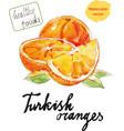 watercolor oranges vector image vector image