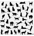 black cat set isolated transparent background vector image
