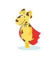 funny puppy dog character in red superhero cape vector image vector image