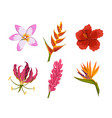 isolated tropical flowers rainforest nature vector image