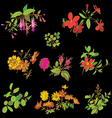 Meadow flower and leaf set isolated on black vector image vector image