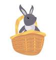 rabbit basket easter vector image vector image