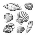 seashells handdrawn sketch vector image vector image