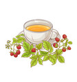 raspberry tea vector image vector image