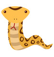 rattle snake on white background vector image