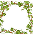 square jungle frame with vines and empty space vector image vector image