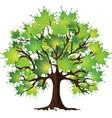 maple tree on white vector image
