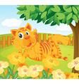 A tiger in the fenced garden vector image vector image