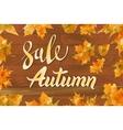 autumn special sale vintage typography vector image vector image