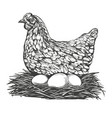 chicken with eggs hand drawn vector image vector image