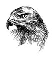 hand sketch eagle head vector image vector image