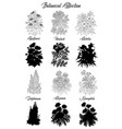 set black and white outline flowers -hemlock vector image vector image