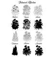 set black and white outline flowers -hemlock vector image vector image