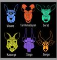 set of polygonal head animals polygonal logos vector image vector image