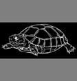 silhouette turtle iconcartoon icon vector image