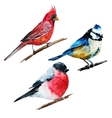 Watercolor birds vector image vector image