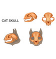anatomy of a cats skull vector image vector image