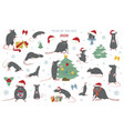 Different rats christmas collection rat poses and