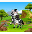 funny zebra cartoon in the jungle vector image vector image