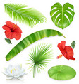 jungle set leaves and flowers tropical plants vector image