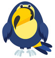 toucan bird with happy face vector image vector image