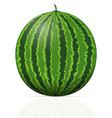 watermelon 01 vector image vector image