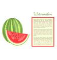 watermelon citron melon berry ripe tropical fruit vector image vector image