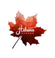 maple leaf with red triangles texture vector image