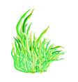 algae symbol icon design beautiful isolated on vector image vector image