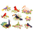 colorful birds sitting on branches animals and vector image vector image