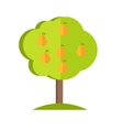 Pear Tree in flat style design vector image
