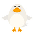 white duck on white background vector image