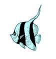 bright tropical sea fish vector image