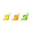 juice splash lemon orange lime set vector image vector image