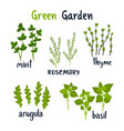 set of herbs with lettering green vector image