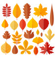 set tree autumn leaves isolated on white vector image vector image