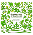 wormwood plant elements set on white background vector image