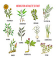 collection of herbs for athlete foot vector image vector image