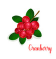 cranberry fruit bunch with green leaf cartoon icon vector image vector image