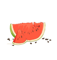 refreshing watermelon pieces vector image